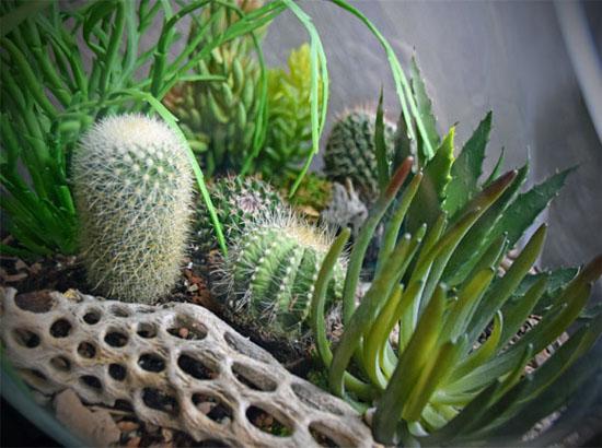 cacti and succulent terrarium
